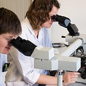 ZNA Anatomo-pathologie: patholoog aan het werk