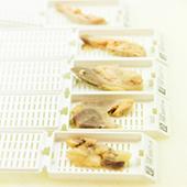 ZNA Anatomo-pathologie: weefselstukjes in cassettes
