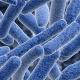 (kosten)efficiënt antibioticabeleid voor de ziekenhuisarts