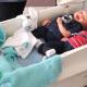 Levensechte pop brengt rust bij mensen met dementie